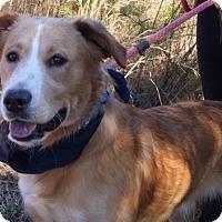 Adopt A Pet :: Happy - Westport, CT