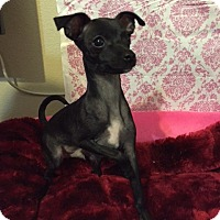 Adopt A Pet :: Luke - Las Vegas, NV