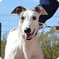 Adopt A Pet :: Gabriel - Tucson, AZ