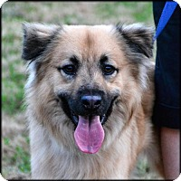 Adopt A Pet :: Noble - Westminster, MD