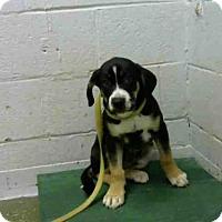 Adopt A Pet :: JACOLBY - Atlanta, GA