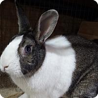 Adopt A Pet :: Fluffy - Williston, FL