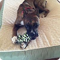 Adopt A Pet :: Maximus - Plant City, FL