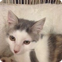 Adopt A Pet :: Summer - Bridgeton, MO