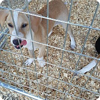 Hound (Unknown Type) Mix Puppy for adoption in Livingston Parish, Louisiana - Mike