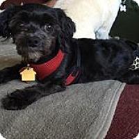 Adopt A Pet :: Alina - Mount Gretna, PA