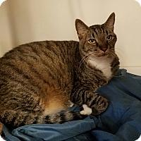 Adopt A Pet :: TYRONE - Phoenix, AZ