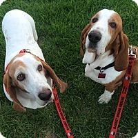 Adopt A Pet :: Katie - Whittier, CA