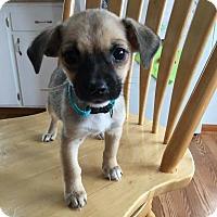 Adopt A Pet :: Macy - Tomah, WI