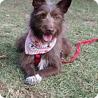 Adopt A Pet :: Sallie - San Mateo, CA