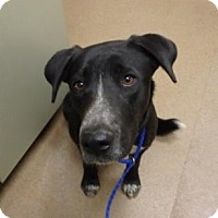 Adopt A Pet :: Liberty #163659 - Apple Valley, CA