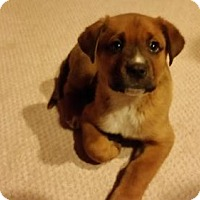Adopt A Pet :: King Tut-ADOPTION PENDING - Parker Ford, PA
