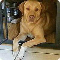 Adopt A Pet :: Jasper - Seattle, WA