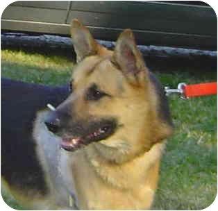 German Shepherd Dog Dog for adoption in Pike Road, Alabama - Kelly