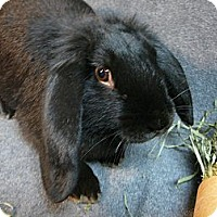 Adopt A Pet :: Donia - Newport, DE