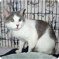 Adopt A Pet :: Travis - Colmar, PA