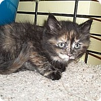 Adopt A Pet :: Rosen - Acme, PA