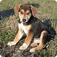 Adopt A Pet :: *Cody - PENDING - Westport, CT