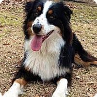 Adopt A Pet :: *Dodger - PENDING - Westport, CT