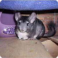 Adopt A Pet :: Little Bit - Avondale, LA