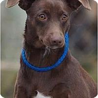 Adopt A Pet :: Betsy - Providence, RI