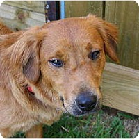Adopt A Pet :: Cali 2 - Foster Needed! - kennebunkport, ME