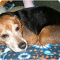 Adopt A Pet :: Lizzie - Novi, MI
