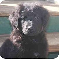 Adopt A Pet :: Captain Crunch - Albany, NY