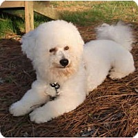 Adopt A Pet :: Izzy - Mooy, AL