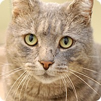 Adopt A Pet :: Joe - Marietta, GA