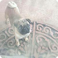 Adopt A Pet :: Emily - Austin, TX