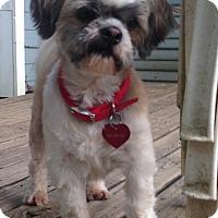 Adopt A Pet :: Einstein - Conway, AR