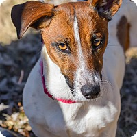 Adopt A Pet :: Penny - Conyers, GA
