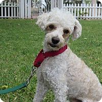 Adopt A Pet :: Sunny - Santa Ana, CA