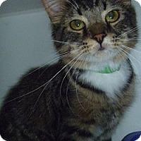 Adopt A Pet :: Daniel - Hamburg, NY