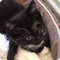 Adopt A Pet :: Rikki - East Hanover, NJ