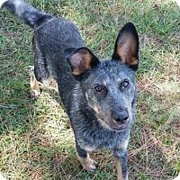 Adopt A Pet :: Brewton - Natchitoches, LA