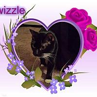 Adopt A Pet :: Swizzle - Putnam, CT