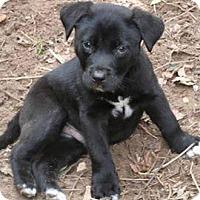 Adopt A Pet :: Ryder - Adoption Pending - Middletown, RI