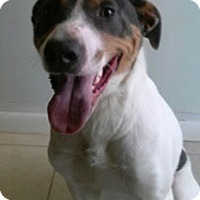 Adopt A Pet :: Danny - Abilene, TX