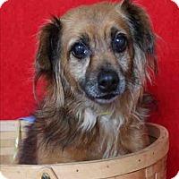 Adopt A Pet :: Tess - Encino, CA