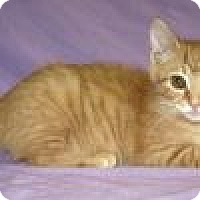 Adopt A Pet :: Hennessee - Powell, OH