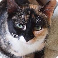 Adopt A Pet :: Pollyanna Paws - Buhl, ID