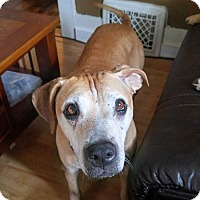 American Pit Bull Terrier Mix Dog for adoption in Des Moines, Iowa - Nevaeh