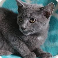 Adopt A Pet :: Natasha - Spring Valley, NY