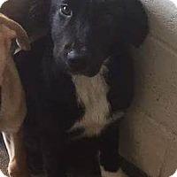 Adopt A Pet :: Sam - Harleysville, PA