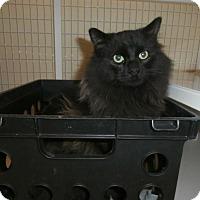 Adopt A Pet :: Fozzie - Gunnison, CO