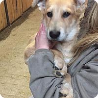 Adopt A Pet :: Rick - Huntsville, TN
