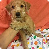 Adopt A Pet :: Ford (ARSG) - Santa Ana, CA