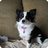 Adopt A Pet :: Lady 3408 - Toronto, ON
